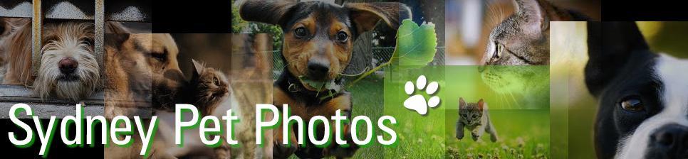 Sydney Pet Photos