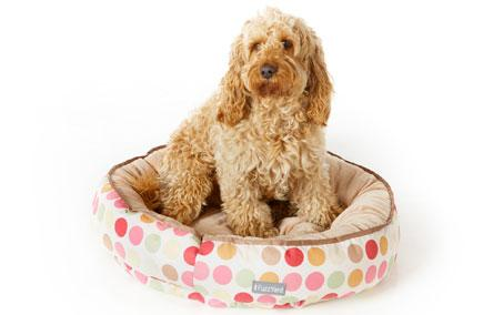 Dog Beds & Carriers