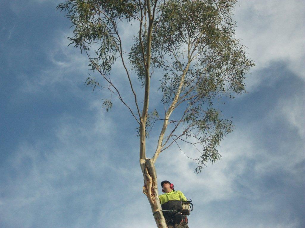Climbing Tree Services Servicing Gawler Barossa Clare