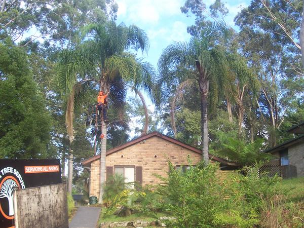 All Area Tree Service Pty Ltd Wyoming New South Wales