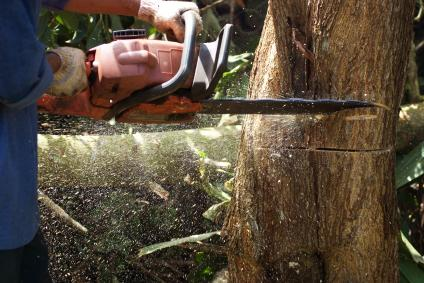 B Amp R Tree Services Tree Fellers Eatons Hill Queensland