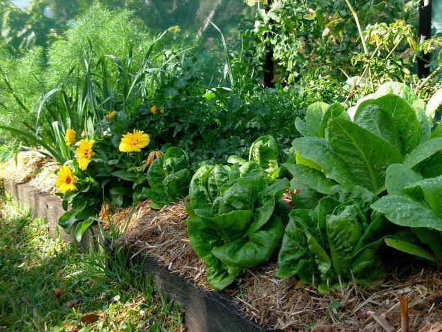 Gardening Amp Garden Design From Moonee To Bonville