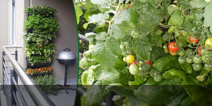 Green Walls Edible Wall Gardens Vertical Wall Gardens