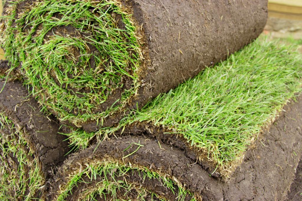 Your local garden maintenance lawn turf tree felling for Local garden maintenance