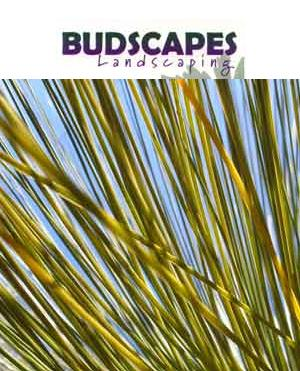 Budscapes Landscaping Hornsby Heights New South Wales