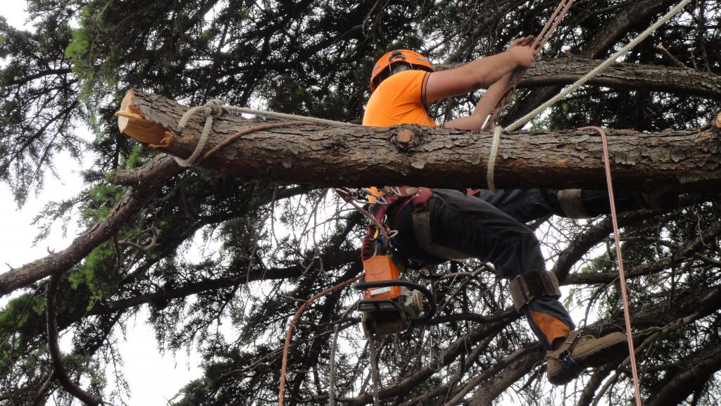 Metro All Tree Services Professional Tree Services