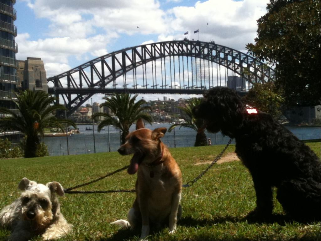Dog Walking around Sydney