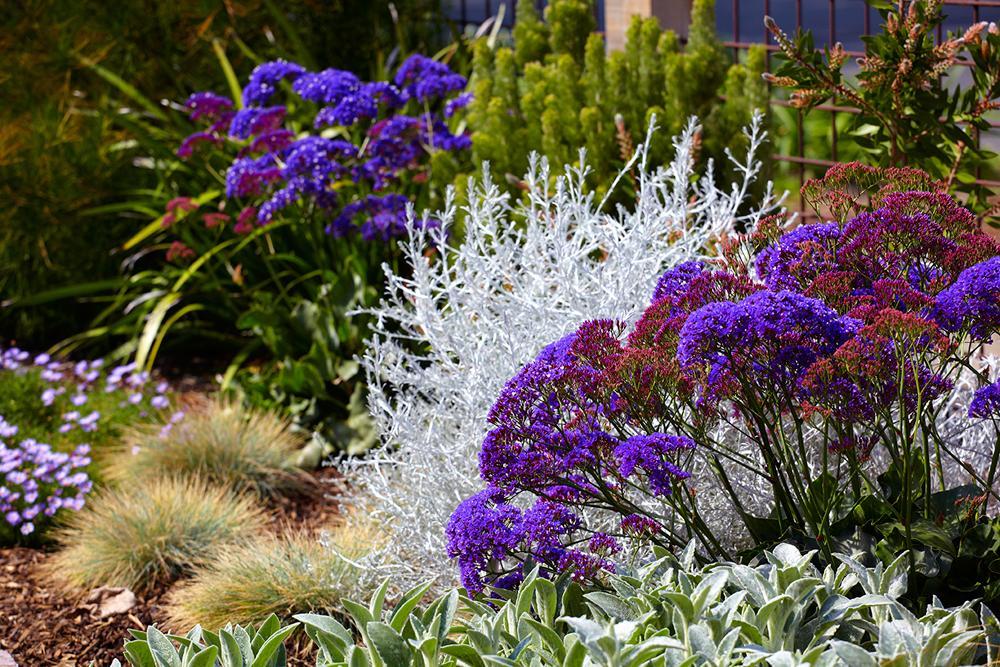 6 Steps To A No Work Cottage Garden Hipages Com Au