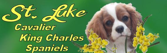 St Luke Cavalier King Charles Spaniels