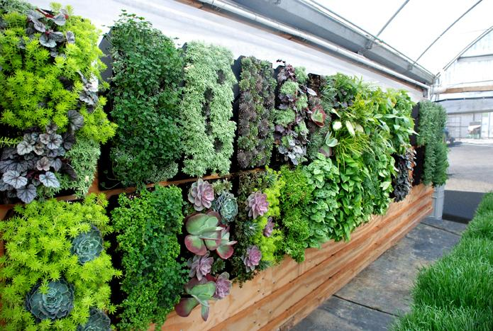Vertical Gardens Inspiration Luscious Living Spaces