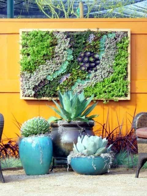 Grow A Cactus And Succulent Garden