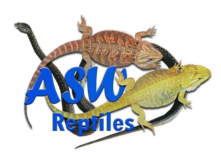 Andrew Asw Reptiles