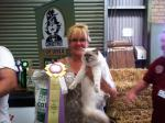 Violet (Runner Up Best Ragdoll)