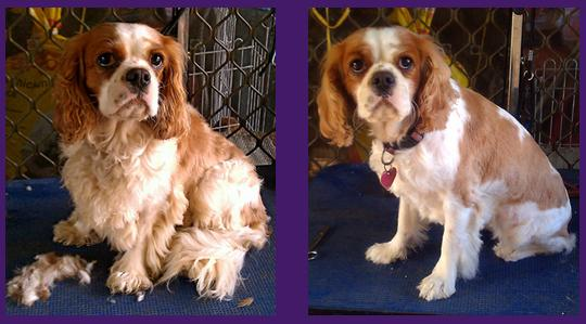 Grooming - Before & After
