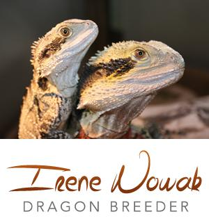 Irene Nowak Dragon Breeder