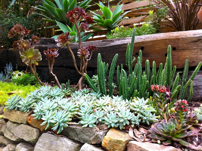 Gardens inspiration form landscapes australia for Low maintenance outdoor potted plants and flowers