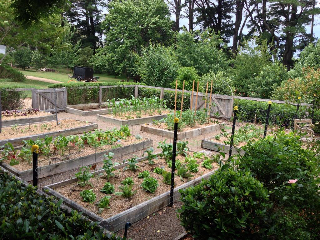 vegetable gardens inspiration - southern scapes