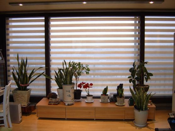 Privacy Screen Ideas by Sheer Elegance Blinds