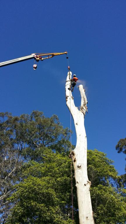 A Cut Above Tree Solutions The Blue Mountains Emu