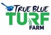 True Blue Turf
