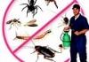 Express Pest Control Labrador, Gold Coast