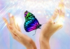 The Healing Butterfly Touch