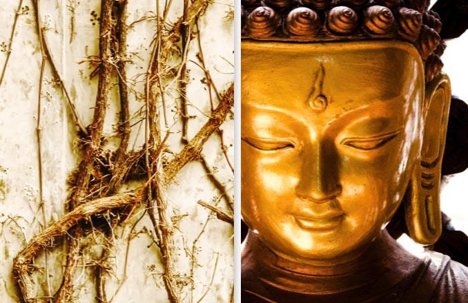 Nosce Te Ipsum.Flower Essences and Healing Arts