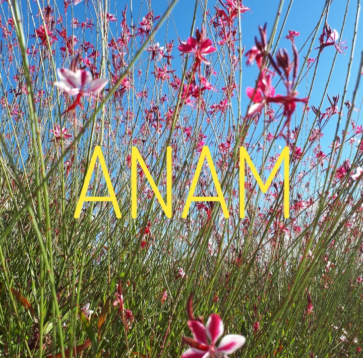 Anam Holistic Therapies