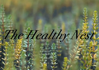 The Healthy Nest
