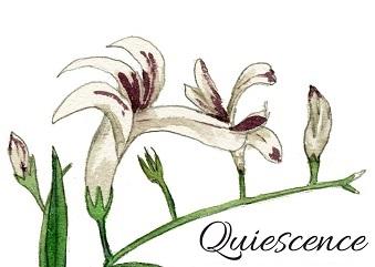Quiescence Chinese Medicine
