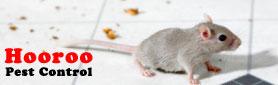 Hooroo Pest Contro - No Fuss, Reasonable Price