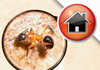 For All Your Property Pest Inspections & Reports