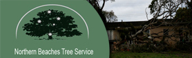 Northern Beaches Tree Service - Tree Feller & Arborist Services
