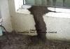 Essential Pest & Termite Control Pty Ltd