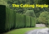 The Cutting Hedge