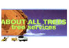 About  All Trees Tree Service - Our Services