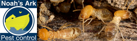 Do You Have a Termite Problem or Need an Inspection? Contact Us Today!