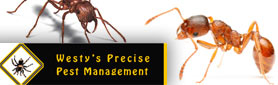 Pest Inspections & Control services