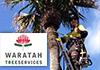 Waratah Tree Services
