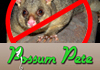 Possum Control Services