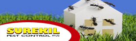 Termite & Pest Control Services - Your Satisfaction Is Our Business