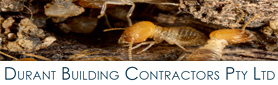 Professional & Thorough Pest Inspections