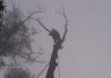 Warranwood Trees & Stumps