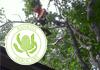 Banksia Arborcare