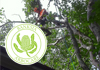 BANKSIA ARBORCARE - Professional Tree Servcies
