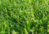 Kagel's Lawn And Garden Maintenance