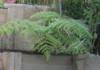 Glens Landscaping