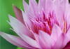 Lotus Healing Therapies