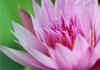 Lotus Healing Therapies