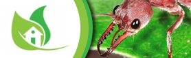 All Aspects Professional Pest Control